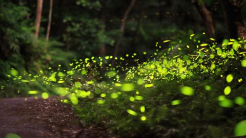L'Eco-cool hunter: una nascente nel mondo della green economy